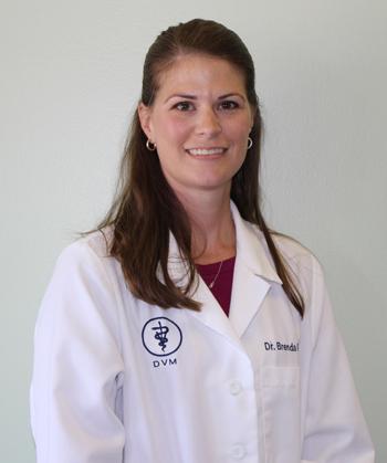 Dr. Brenda Taddeo DVM - Sully Animal Hospital - Centreville, VA